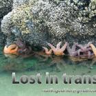 LostinTransition